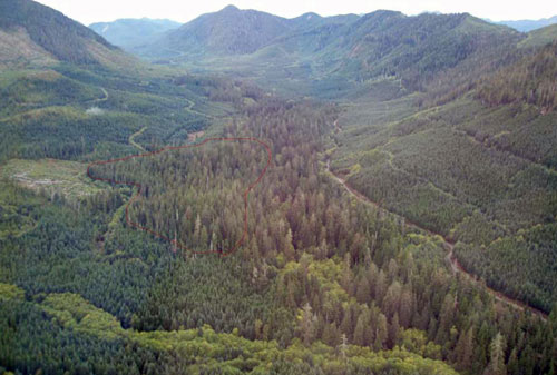 Ministry of Forest photo